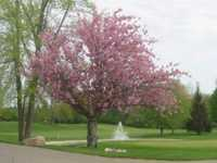 IMA Brookwood Golf Club